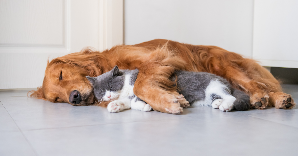 Indoor Air Quality and your pets